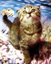 Прекрасный клубный котик скоттиш-фолд брид-класса,  окрас Вискас