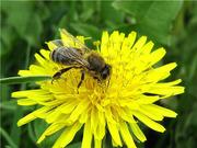Пчелосемьи без посредников