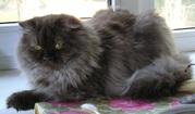котик ищет друга и дом