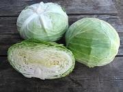 Cемена Китано. Предлагаем купить семена белокочанной капусты НАОМИ F1